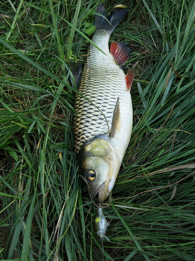Рыбалка на голавлевой речке_10.jpg