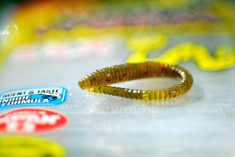 wiggler worm_14.jpg