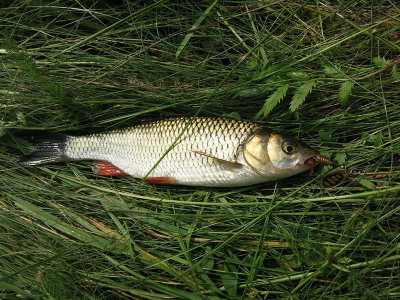 Рыбалка на голавлевой речке_8.jpg